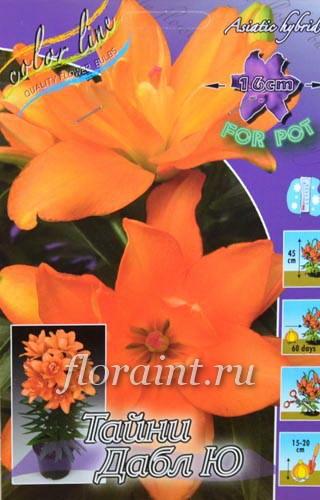 Садовые цветы луковичные энциклопедия с