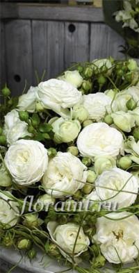 Саженцы: Роза парковая Артемис (Топалович)