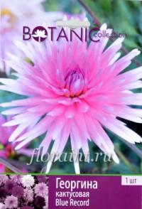 Клубни: Георгина кактусовая Блю Рекорд