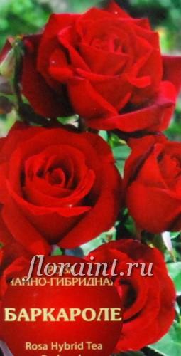 Розы чайно_гибридные купить почтой подарок с днем рождения женщине картинки
