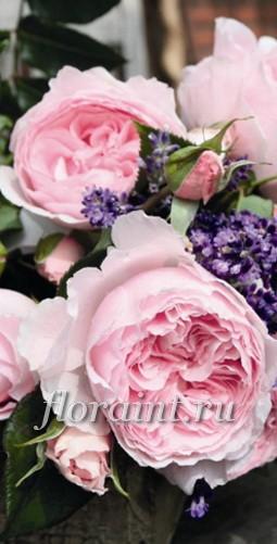 Розы гартентрауме купить цветы кувшинки купить в москве