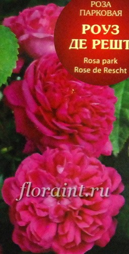 Купить парковые розы в москве