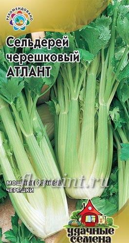 Пряность Сельдерей черешковый Атлант купить - Пряности и лекарственные травы: семена